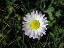 Nuestra Flora_11